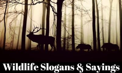 wildlife slogans & sayings