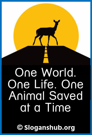 Save Animal Slogans. One world. One life. One animal saved at a time