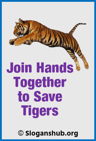 Save Tiger Slogans. Join hands together to save tigers