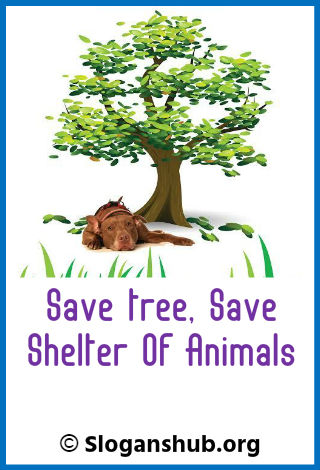 Save Tree Slogans. Save tree, save shelter of animals