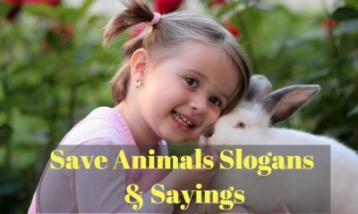 Save animals slogans & sayings