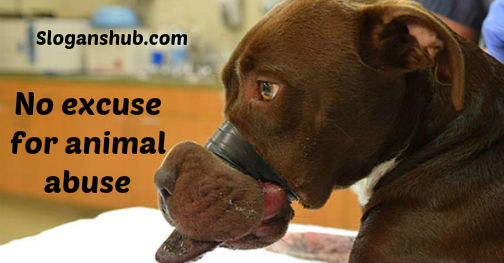 an argument against animal abuse in united states Should animal cruelty be banned there should not be legal action against them animal abuse should be banned because it is harming animals every second of.