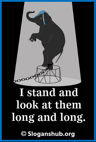Animal Rights Slogans. I stand and look at them long and long
