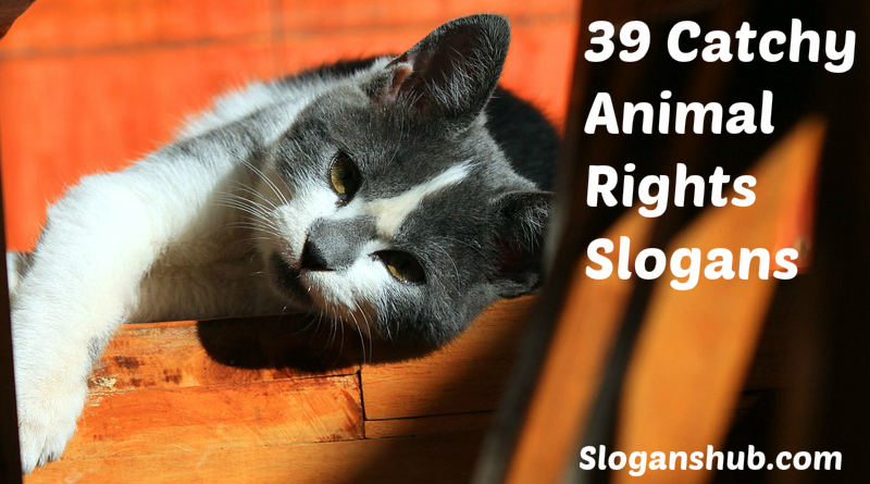 39 Catchy Animal Rights Slogans