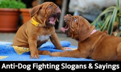 Anti-Dog Fighting Slogans & Sayings