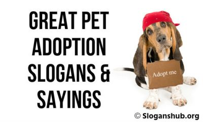 Pet Adoption Slogans & Sayings