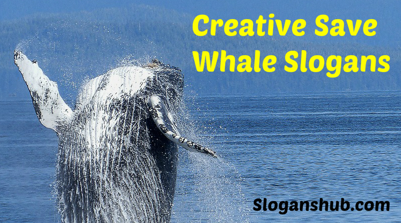 Save Whale Slogans