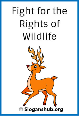 Wildlife Conservation Slogans. Fight for the Rights of wildlife
