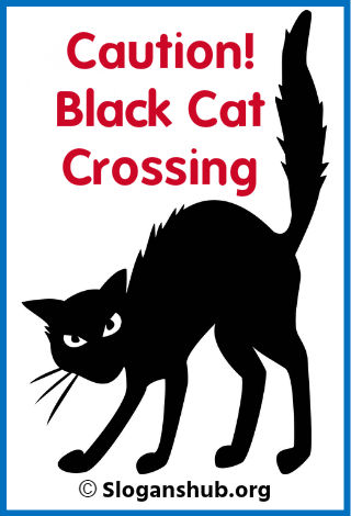 Halloween Slogans. Caution! Black Cat Crossing