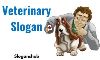 Veterinary Slogan