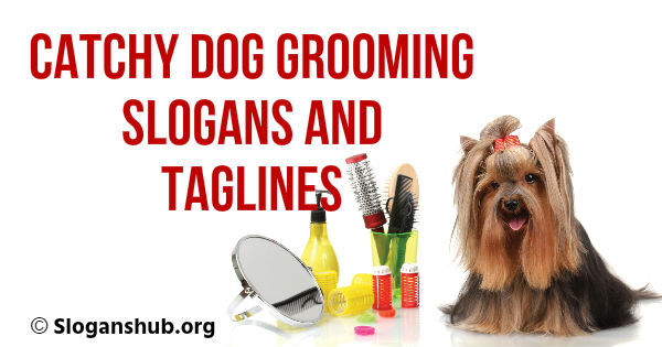 33 Catchy Dog Grooming Slogans and Taglines