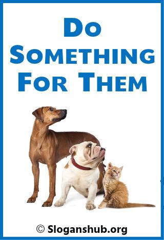 63 Best Animal Shelter Slogans Taglines