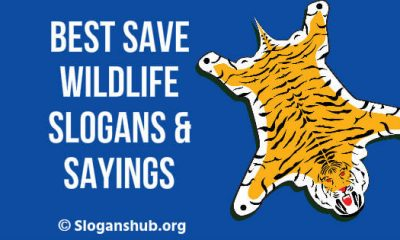 Save Wildlife Slogans & Sayings