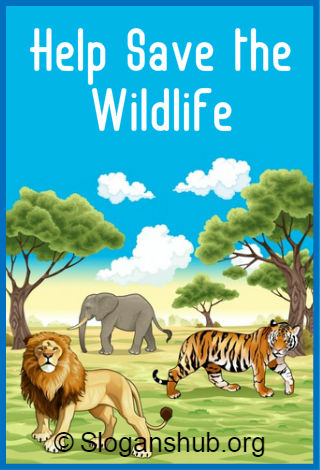Save Wildlife Slogans