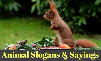 animal slogans & sayings